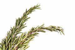 Alpenveilchen Gelbe Blätter : sind mandeln giftig diese sorten sollten sie nicht essen ~ Lizthompson.info Haus und Dekorationen