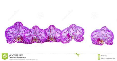 flowers  orchid border stock photo image  bouquet