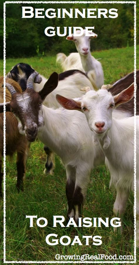how to raise goats raising goats for profit how to raise meat goat the auto design tech