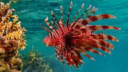 Fish Desktop Wallpapers Computer Animals