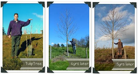 how does it take a tree to grow how to plant trees country trading blog