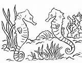 Seahorse Coloring Printable Adults Drawing Pdf Seahorses Ocean Printables Getdrawings Realistic Bell Samanthasbell Getcolorings sketch template