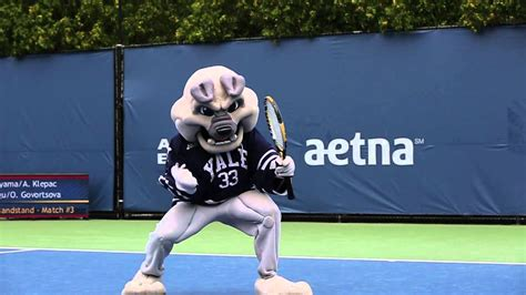 yale school colors new open yale mascot bids for title