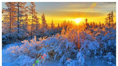Inter Sunrise Forest Hd Wallpaper, Background Images