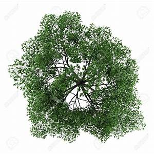 tree top view psd free download - Google Search | Stock l ...