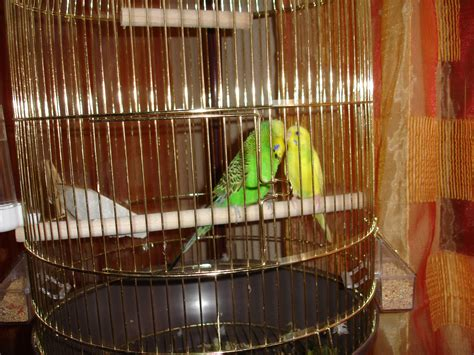 bird cages a guide to choosing one for pets coops