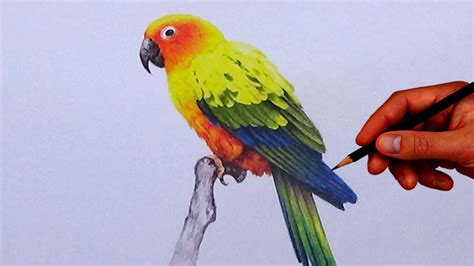bird colors how to draw a bird with simple colored pencils sun