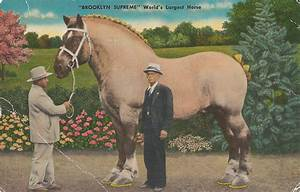brooklyn-supreme-worlds-largest-horse0001 - Poudre River ...