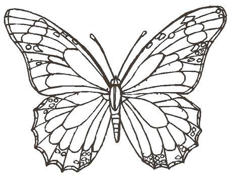 How To Draw Butterfly, Rose Flower, Lady Bug Step By Step