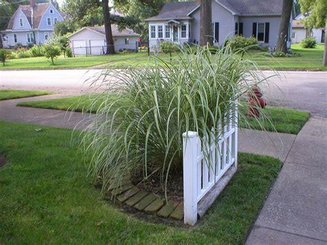 best 25 corner landscaping ideas on