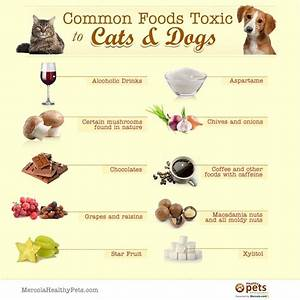 common foods toxic for cats and dogs healthy pets With common dog food
