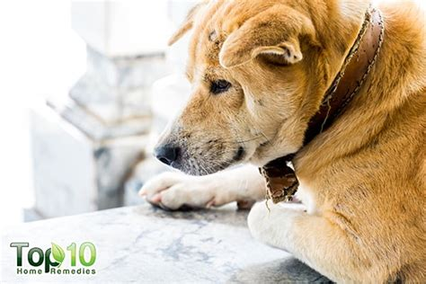 Pets Archives Top  Home Remedies