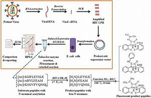 Fluorometric Assay For Phenotypic Differentiation Of Drug