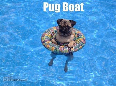 dog memes images  pinterest dog memes funny
