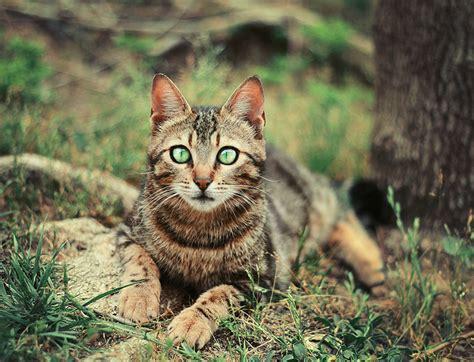 Cat's Beauty By Thunderi On Deviantart