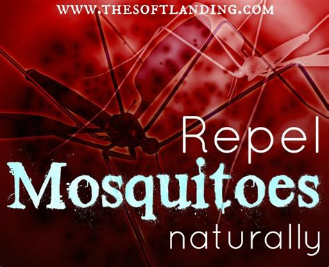 how to repell mosquitoes how to repel mosquitoes naturally the soft landing 174