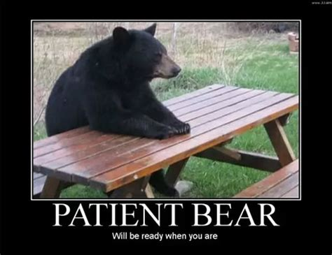 Patient Bear Meme - 20 demotivational posters free word pdf psd png jpg illustrator format download free