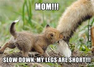 Funny Animal Pictures With Words | www.pixshark.com ...