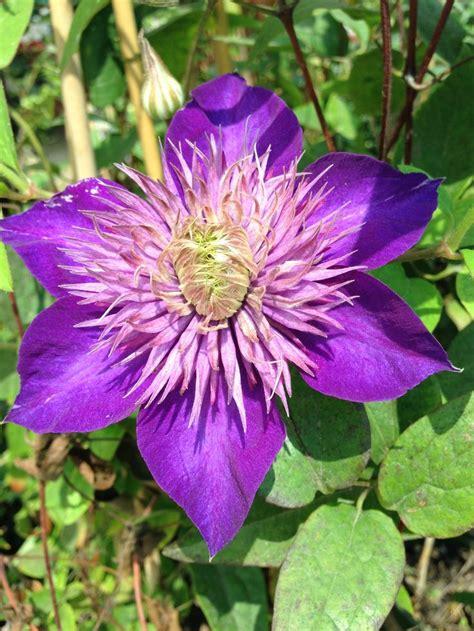 Fresh Flower Fresh Flowers Pinterest