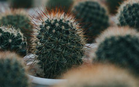 Download wallpaper 1440x900 cactus, succulent, plant ...