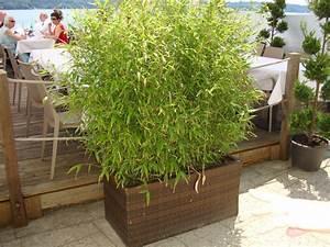 Kübel Bepflanzen Winterhart : marienglockenblume marienglockenblume prachtmischung ~ Michelbontemps.com Haus und Dekorationen