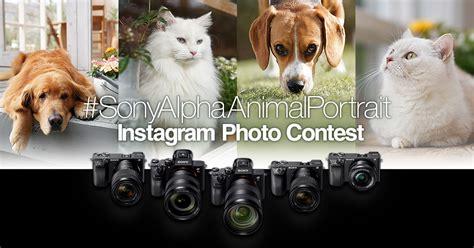 sony alpha animal portrait instagram contest australia