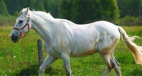 vitamine fuer das pferd heilwiki gesundheitsportal