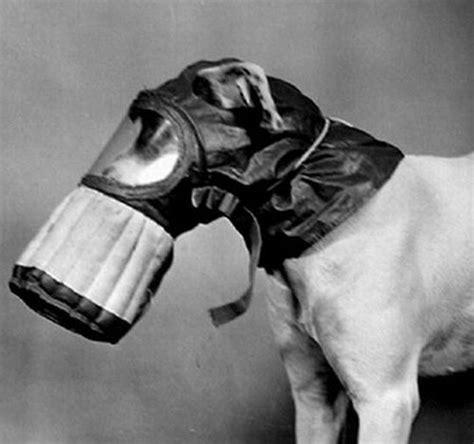 army dog gas masks  pics izismilecom