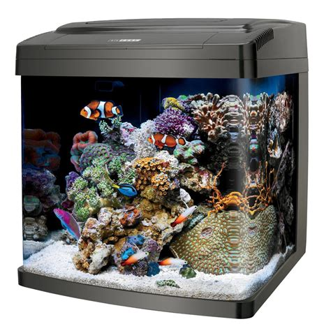 fish aquariums cool fish tanks aquariums webnuggetz com