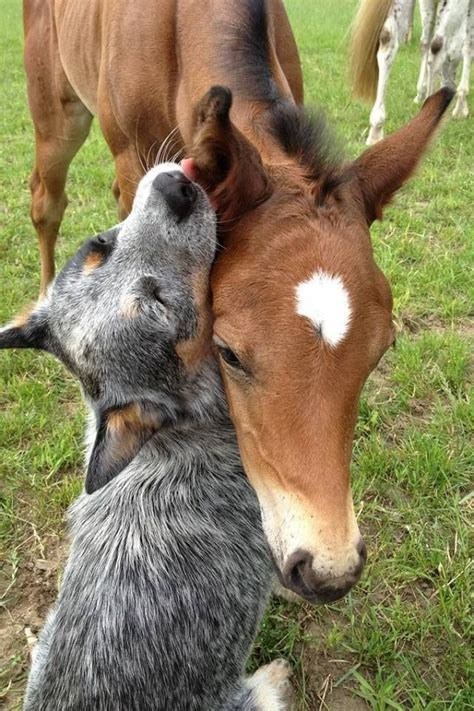 horses dog facts terrible horse friends friendship very