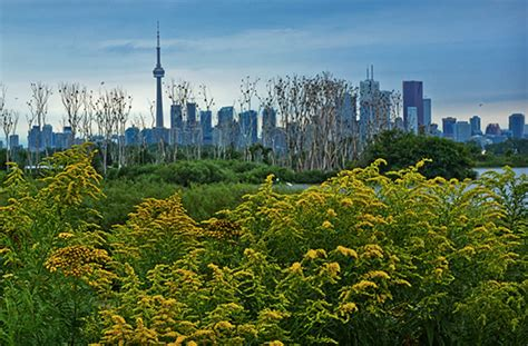 The Top 5 Parks For A Nature Walk In Toronto