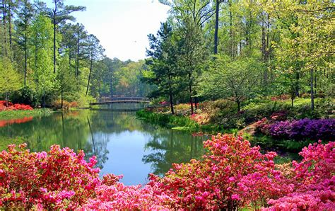 Where To See Best Flower Views In Spring  Travel Tips