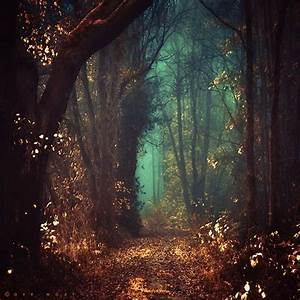 Enchanted forest background tumblr » Background Check All