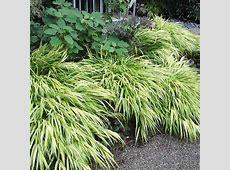 Ornamental Grasses in the Landscape