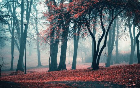 Spooky Fall Backgrounds by Autumn Park Trees Leaves Wallpapers Autumn Park Trees