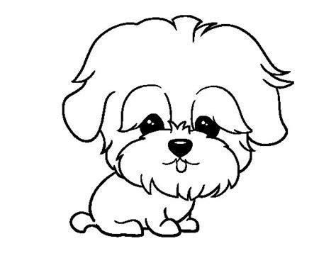 mini cuccioli da colorare disegno di maltese da colorare acolore