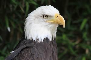 Águilas Imágenes y Fotos