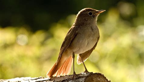 birds page mallorca bird watching