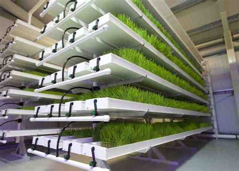 Best + Hydroponics System Ideas On Pinterest