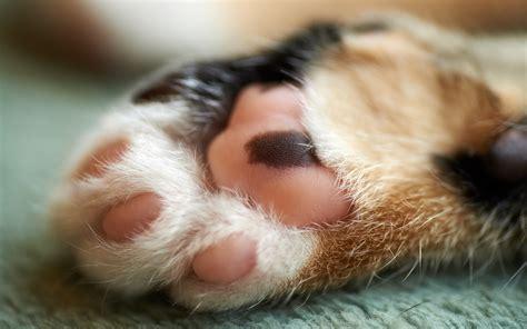 cat paws hd desktop wallpapers  hd