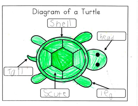 mrs ricca s kindergarten nonfiction writing turtles