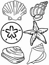 Coloring Printable Seashell Mermaid Sea Shells Ocean Sheets Crafts Bestcoloringpagesforkids Different sketch template