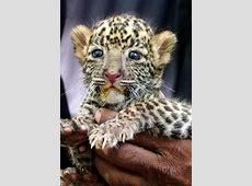 30 süße Baby Tiere Sehen sie doch nicht niedlich aus?