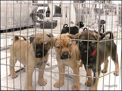 Ee  Puppy Ee    Ee  Adoption Ee    Ee  Puppy Ee    Ee  Adoption Ee   Broward Humane Society At