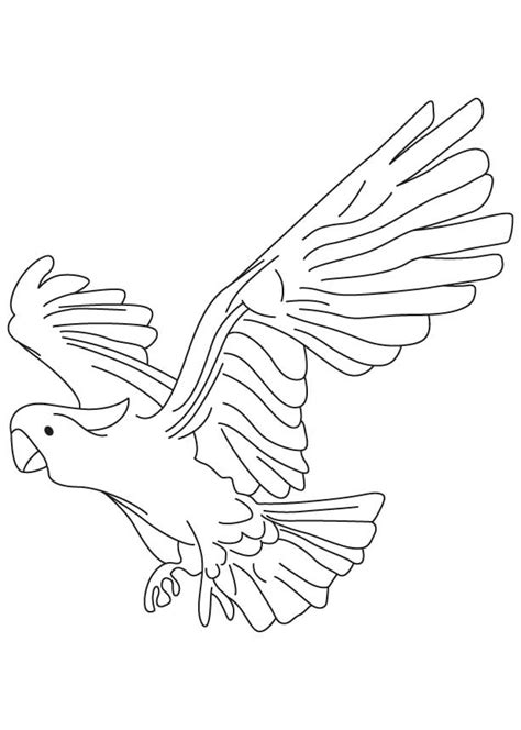 large  zealand parrot coloring page   large  zealand parrot coloring page