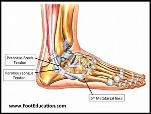 75  Extensor Digitorum Longus Ankle Pain
