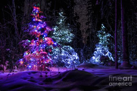 lake farm park christmas events tree winter forest photograph by gary whitton