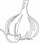 Garlic Coloring Pages Colouring Gourd Clove Bulb Template Pungent Vegetables Picolour sketch template