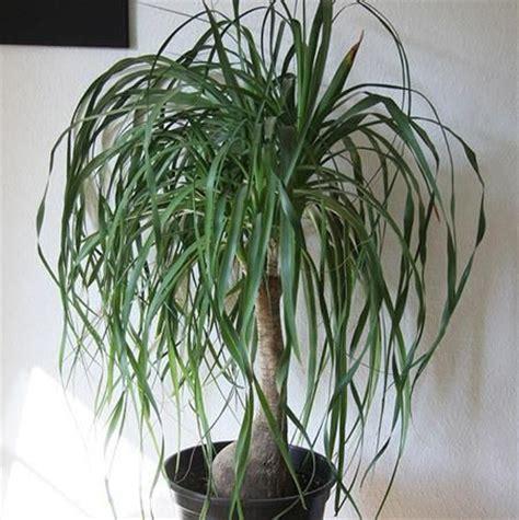images  unusual plants  pinterest