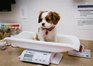 pets going to vet
